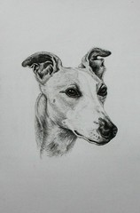 Whippet Finished