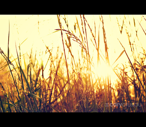 blur nature colors canon flickr colours 85mm canonef85mmf18usm
