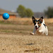 Colt and His Ball by Emery_Way