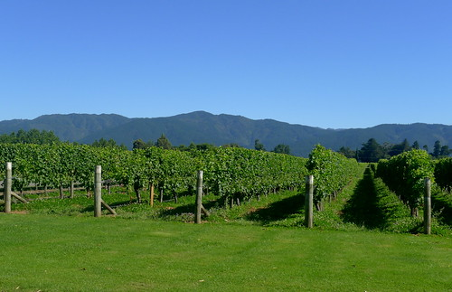 Marlborough wine country