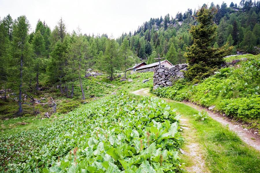 Marilleva 1400, Trentino, Trentino-Alto Adige, Italy, 0.005 sec (1/200), f/8.0, 2016:06:29 13:04:15+00:00, 14 mm, 10.0-20.0 mm f/4.0-5.6
