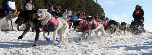 5402908819 8f7dd29108 Upper Peninsula Sled Dog Race