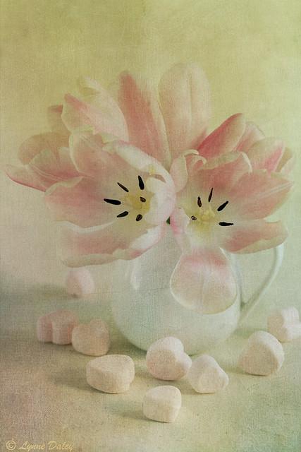Hearts & Tulips