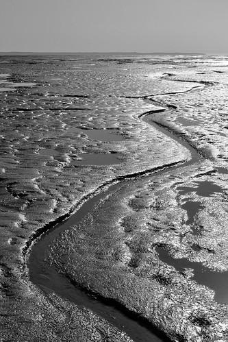 Mudflat channel. Kincaid Park, Alaska