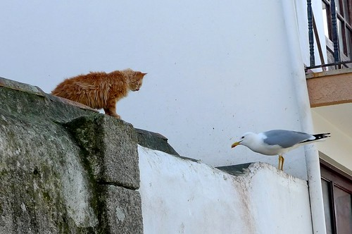 The cat, the seagull and...