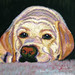 soulful eyes dog painting by BelindaMuth
