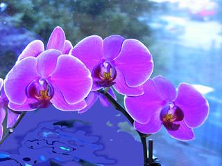 Orchideen rosa  , effect    -047/482 v