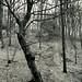 Öfter Wald #9