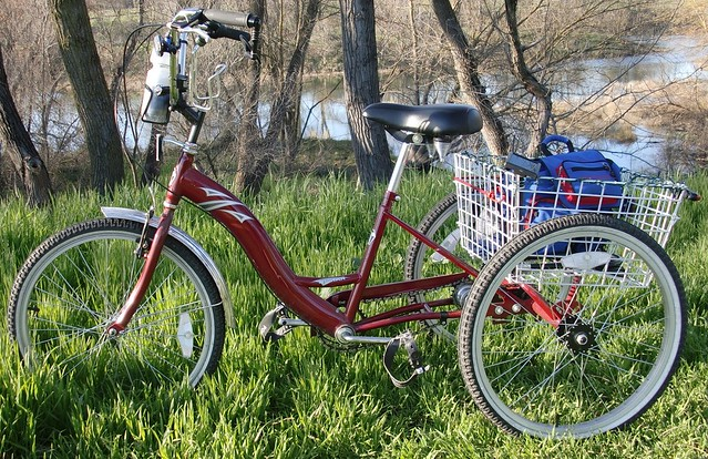 Torker Adult Tricycle 61