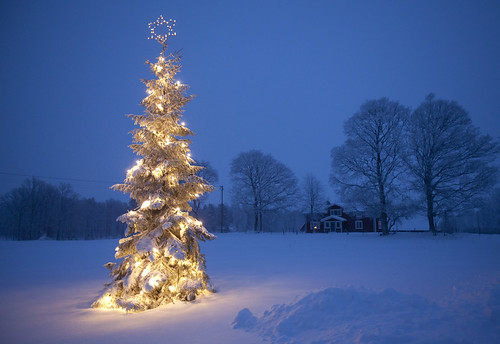 outdoor christmas tree by Harabergsmannen