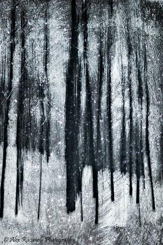 trees winter bw snow tree texture seasons unitedstates connecticut snowstorm northamerica snowing 1001nights danbury scratchestexture 1001nightsmagiccity mygearandmepremium mygearandmebronze