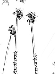 Palm Trees - Toonpaint