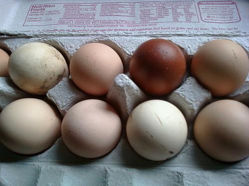 Mixed Eggs