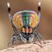 _MG_4139 (1) peacock spider Maratus volans by Jurgen Otto