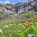 Biglen Alp (Alan Park)