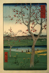 19 - fuji fruit trees
