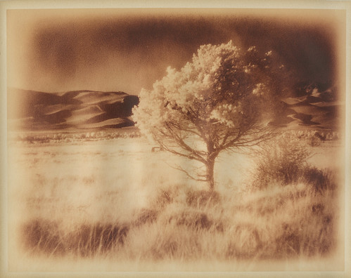 Tree and Dunes, lithed