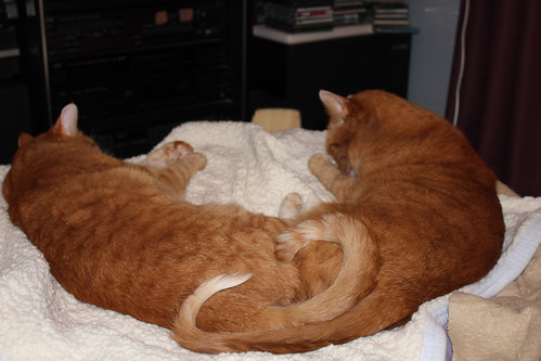 """A Tail OF Two Kitties."" :-))"