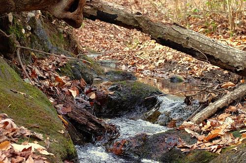 winter macro fall nature water bartramforest