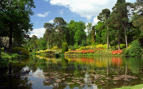 Leonardslee Gardens, West Sussex, UK | Reflections of yellow and orange-red azaleas in lake (1 of 19)