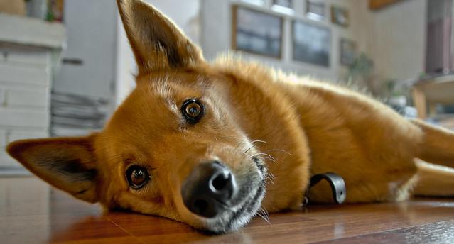 Urho The Dog