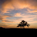 Oak_Tree_IMG_4926_Master by chippawwa_photos