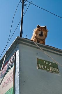 Oaxacan Dog, 2009