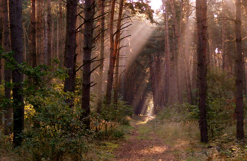morning light forest poland
