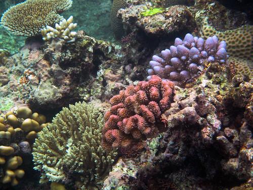Great Barrier Reef 024