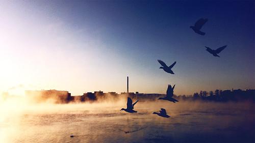 winter lake sunrise finland outdoors dawn duck drake tampere iphone wildduck 2011 pyhäjärvi hatanpää eteläpuisto viinikanlahti ratinansilta