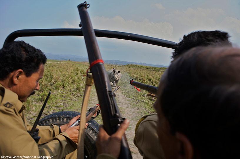 Rangers fleeing an angry rhino