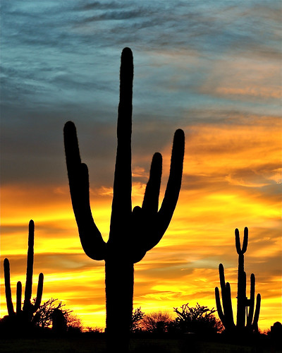 sunset shadow arizona clouds nikon scottsdale saguaro d90