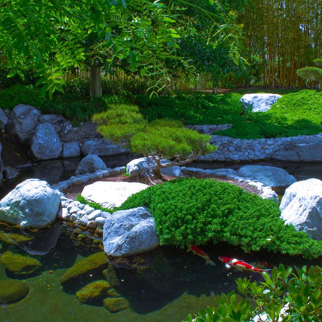 Japanese friendship garden koi pond flickr photo sharing for Japanese garden koi