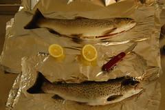 northern pike(0.0), bass(0.0), trout(0.0), cod(0.0), barramundi(0.0), animal(1.0), salmon-like fish(1.0), fish(1.0), fish(1.0), seafood(1.0), food(1.0),