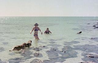 Swimming among the Stromatolites, Hamelin Pool -1976