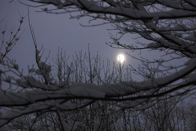 january 2010, wakefield MA