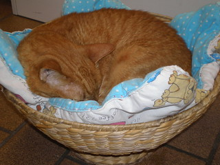 Prince in a basket
