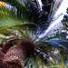 Botanical Gardens-0068_69_70.jpg
