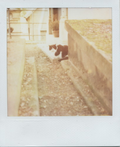 "7/52: un chat de Paris  (52 weeks of ""meet the cat"")"