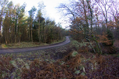 Wyedean Forest Rally 2011