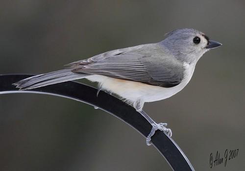 ny newyork birds canon bokeh 7d upstatenewyork capitaldistrict albanycountyny mygearandme 100x400mmusml