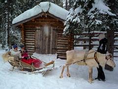Reindeer Rides