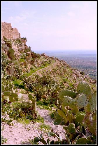 Takrouna - hillside