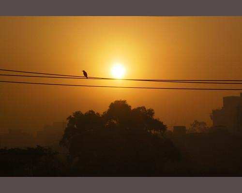 trees orange sun bird nature silhouette sunrise mygearandme