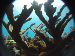 coral reef, algae, coral, sea, marine biology, underwater, reef,