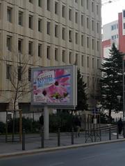 Marseille en fleurs (MARSEILLE,FR13)
