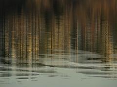 2011: Week 7 // Lake Crabtree reflections