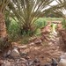 Agriculture in Extreme Environments - Irrigation channel for wheat fields and date palms by Richard Allaway