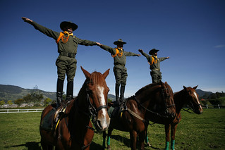 Policia Colombia Horses