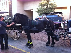 vehicle, pack animal, coachman, horse, horse harness, horse and buggy, land vehicle, carriage,